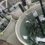 Proyecto sobre pienso para acuicultura